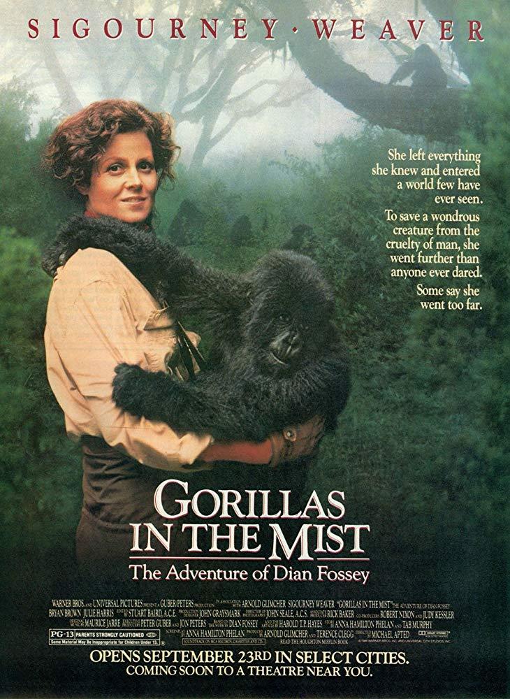 weaver gorilla nella nebbia